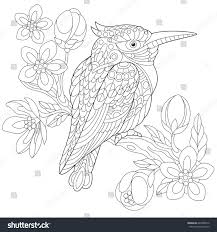 coloring page australian kookaburra kingfisher bird stock vector