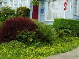 10 best perennials for shade diy