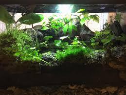 native aquarium plants native terrarium after about a month of growth terrariums