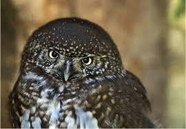 mammiferi volanti foto animali notturni 5 40 tutto gratis