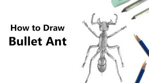 how to draw a bullet ant with pencils time lapse youtube