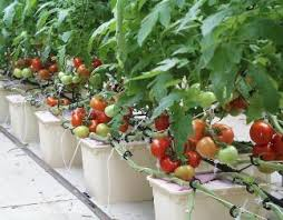 greenhouse and hydroponic supplies wholesale and retail with start