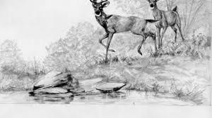 pencil drawing of deer 4 best images of deer sketches printable