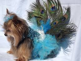 Yorkie Costumes Halloween 19 Dog Costumes Images Dog Costumes Peacock