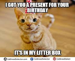 Happy Cat Meme - happy birthday cat memes cat breed selector