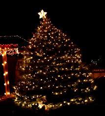outdoor christmas tree lights large bulbs christmas lights featues an outdoor christmas tree decorated with
