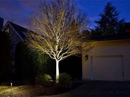outdoor lighting portland oregon tree uplighting landscape lighting forest tree lighting