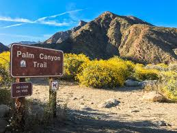 Where Is Anza Borrego by Borrego Palm Canyon Anza Borrego Desert State Park Hiking In