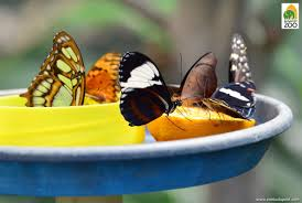 what do the inhabitants of the butterfly house eat zoo in the