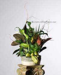 indoor plants for home u0026 office green plants vickies flowers