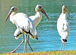 Florida Backyard Birds - photo gallery bugs and critters in my florida backyard