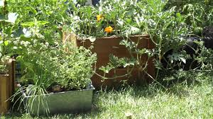 how to plant a personal vegetable garden garden space youtube