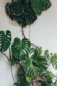 córdoba in andalusia spain plants