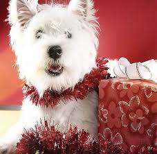 christmas cards dogs u0026 puppy beautiful designs collection on ebay