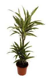 Best Low Light Plants 8 Best Office Plants Images On Pinterest Office Plants Low