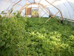 greenhouse for vegetable garden read about my experience building and using a hoophouse in the