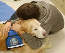 Comfort Pet Certification Why We Turn To Dogs When Disaster Strikes Mnn Mother Nature