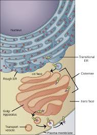 mitochondria video structure of a cell khan academy