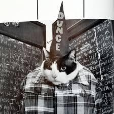 cat high the yearbook el libro cat high the yearbook un mundo de gatos colegiales