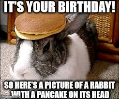 Funny Rabbit Memes - happy birthday pancake bunny imgflip