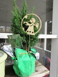 plants u2013 dressing up christmas plants u2013 minding my p u0027s with q