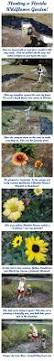 Our Favorite Plants How To by Native Florida Wildflowers June 2009 Wild Flowers Pinterest