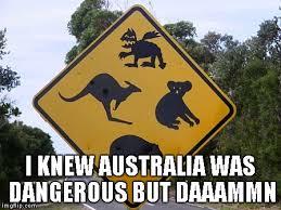 Australia Meme - i knew australia was dangerous but daaammn