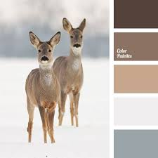 best 25 gray and brown ideas on pinterest gray brown paint