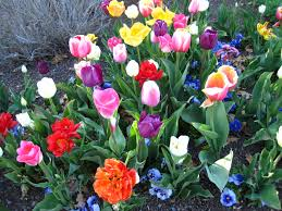thanksgiving point tulip festival coupons 2018 coupons on makeup