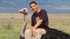 How To Make A Drake Meme - understanding drake s meme appeal noisey
