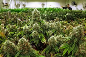 Sarasota County Zoning Map Sarasota County Oks Limits On Medical Marijuana Businesses