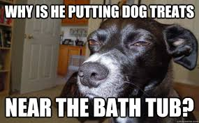 T Dog Memes - the best bathtime pet memes guaranteed to make you squeal