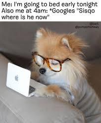 Pomeranian Meme - 25 memes about pomeranian pomeranian memes