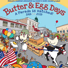 chicken laying out the facts for butter and egg days