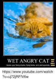 Flying Cat Meme - wet angry cat kitty needs a screw your flying sharks flying tanks