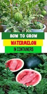 1524 best gardening images on pinterest gardening vegetable