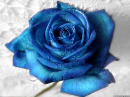 Blue Flower Backgrounds - rose tag wallpapers page 84 love red rose one picture flower