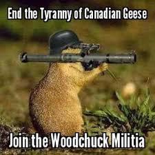 Goose Meme - canada goose meme uk black pride
