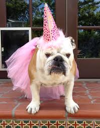 100 happy birthday dog images meme quotes pictures and