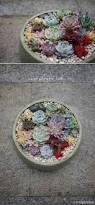 best 25 succulent arrangements ideas only on pinterest