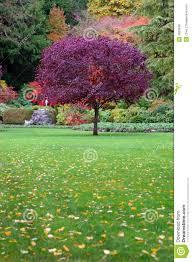 albero giardino albero in un giardino immagine stock immagine di esterno 3603949