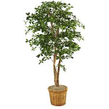 olive tree in planter walmart