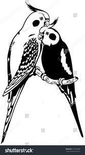 cartoon cockatiel pair cockatiel parakeets black white image stock vector 215182588