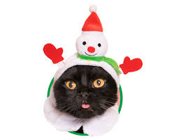 cat christmas things cats christmas bonnets boing boing