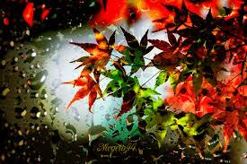 imagenes animadas de otoño 32 imágenes animadas hojas de otoño 1000 gifs gifs 2 pinterest
