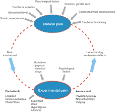 human experimental pain models for assessing the therapeutic