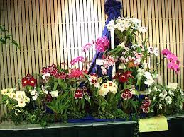 Flower Shops Las Cruces Nm - minneapolis florist and flower shop 1 800 356 7258 crystal lake
