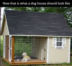 Doghouse For Large Dogs Top Of The Line Doghouse Pictures Photos And Images For Facebook