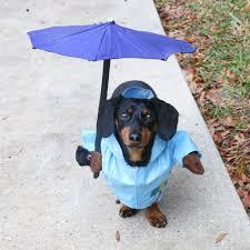 halloween dog shirts hunting dog costume w gun rain umbrella dog costume hockey dog