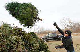 where to recycle your christmas tree living omaha com